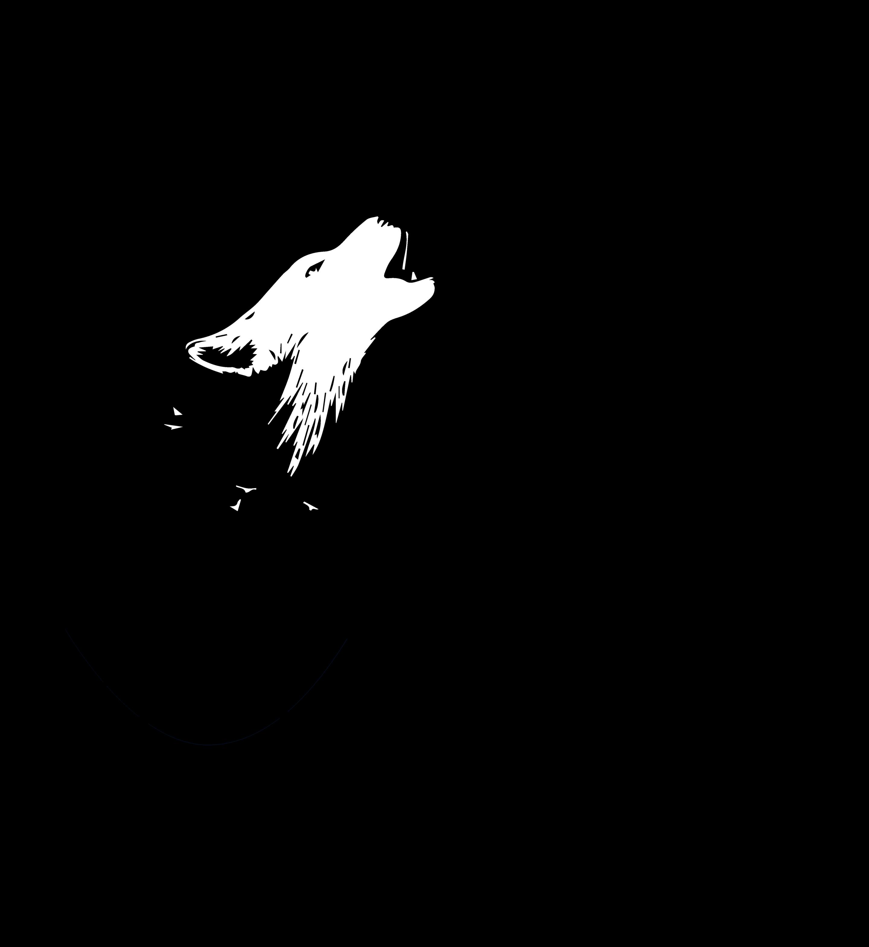 Le loup dort